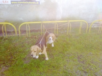 Národná a medzinárodná výstava psov 18. októbra 2014 – Záhorská Ves
